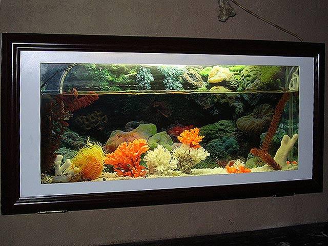 Описание язык аквариумных рыбок