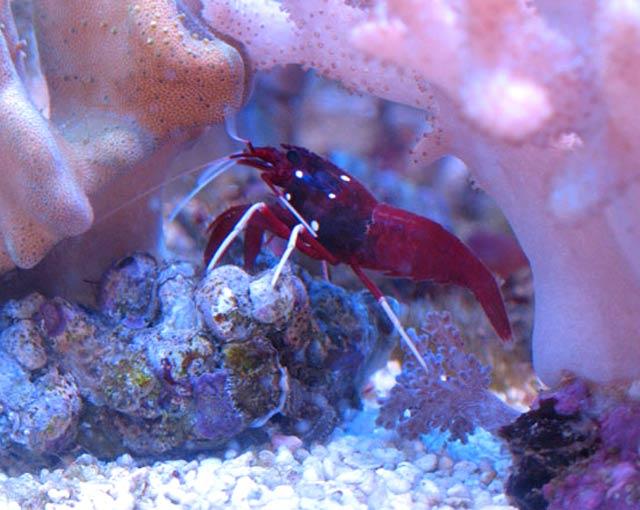 паразиты от красной рыбы