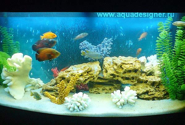 Дизайн аквариума псевдоморе