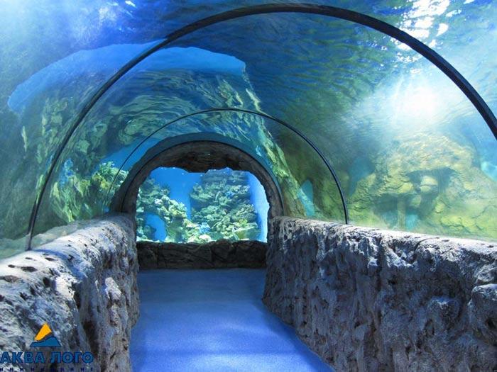 http://www.mosaquarium.ru/images/img_usr_1319388426.jpg