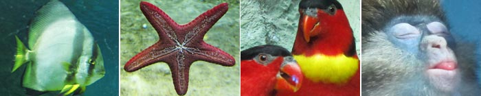 http://www.mosaquarium.ru/images/img_usr_1319396035.jpg