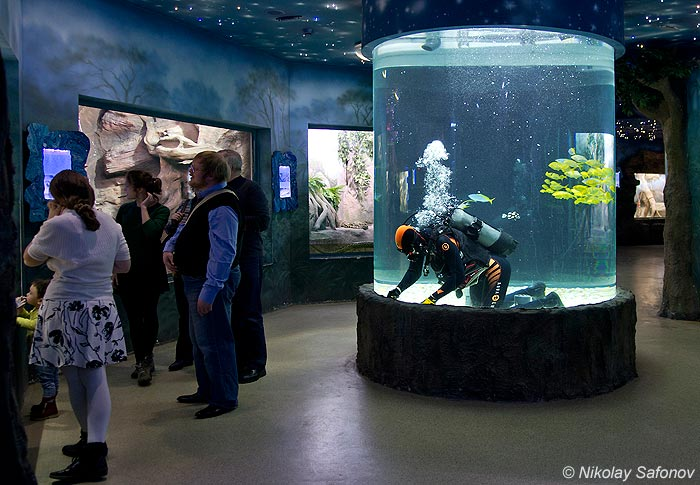 http://www.mosaquarium.ru/images/img_usr_1351700825.jpg